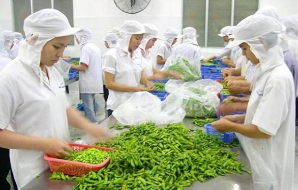 dây chuyền sản xuất rau củ quả an toàn